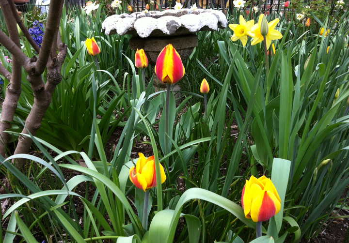 Spring Flowers in NYC Garden